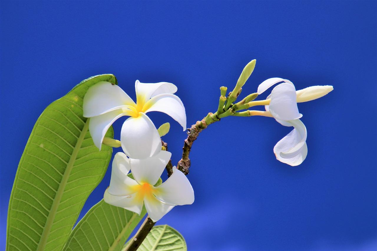 Flora Maldive: le meraviglie di un paradiso tropicale