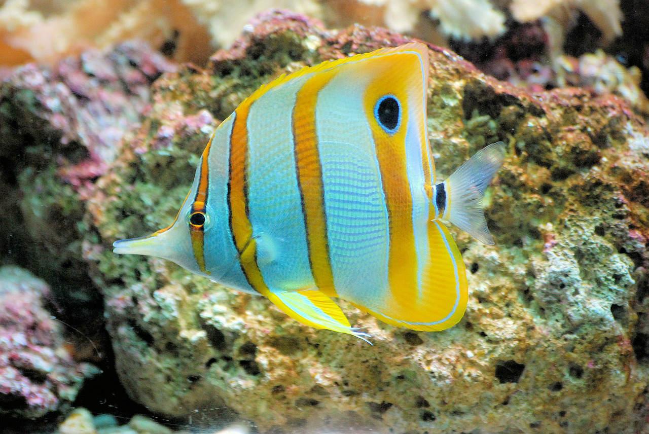 Pesci Maldive: cosa vedrete nelle vostre immersioni