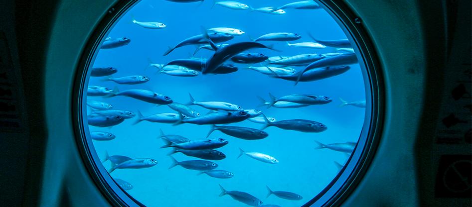 Mini sommergibile Maldive: Una vista a 360 gradi del mare maldiviano